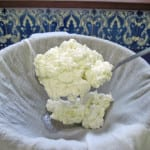 Goat's Milk Cottage Cheese