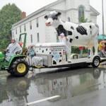 Strolling of the Heifers in Brattleboro, Vermont