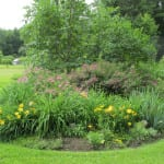 Pictures of Ricki's Gardens
